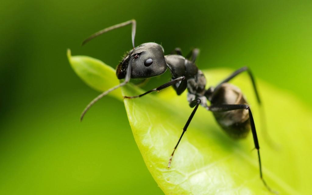 bug-green-leaf
