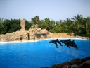dolphins-in-tenerife_1024x768