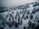 iced-trees_800x600
