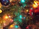 inside-my-tree