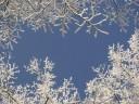 white-tree-blue-sky_800x600
