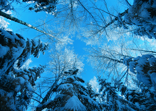 cute desktop wallpaper. Ten cute winter wallpapers